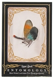 2009 Upper Deck Goodwin Champions #ENT29 Red Nose Lantern Fly Entomology