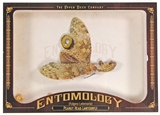 2011 Upper Deck Goodwin Champions #ENT27 Peanut Head Lanternfly Entomology
