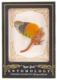 2009 Upper Deck Goodwin Champions #ENT21 Chinese Lantern Fly Entomology