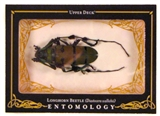 2009 Upper Deck Goodwin Champions #ENT19 Longhorn Beetle Entomology