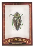 2011 Upper Deck Goodwin Champions #ENT6 Rainbow Jewel Beetle Entomology