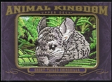 2012 Upper Deck Goodwin Champions Animal Kingdom Patches #AK197 Short-Tailed Chinchilla