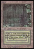 Magic the Gathering Beta Single Bayou UNPLAYED (NM/MT)