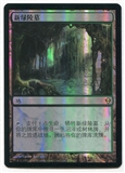 Magic the Gathering Zendikar Single Verdant Catacombs FOIL CHINESE