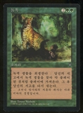 Magic the Gathering Visions Single Natural Order KOREAN - NEAR MINT (NM)