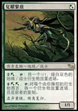Magic the Gathering Shadowmoor CHINESE Single Rhys the Redeemed - SLIGHT PLAY (SP)