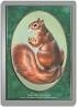 Magic the Gathering Unglued Single Squirrel Token - SLIGHT PLAY (SP)