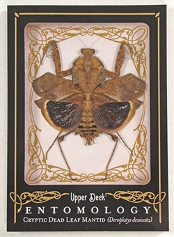 2009 Upper Deck Goodwin Champions #ENT28 Cryptic Mantid Entomology