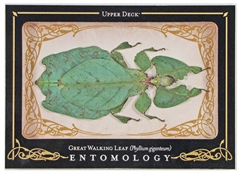 2009 Upper Deck Goodwin Champions #ENT25 Great Walking Leaf Entomology SP