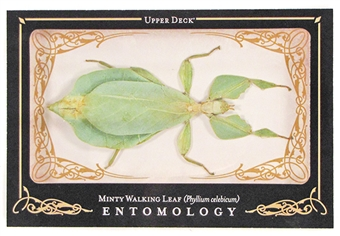 2009 Upper Deck Goodwin Champions #ENT30 Minty Walking Leaf Entomology SP