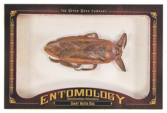 2011 Upper Deck Goodwin Champions #ENT20 Giant Water Bug Entomology