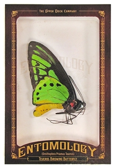 2011 Upper Deck Goodwin Champions #ENT14 Teueros Birdwing Butterfly Entomology
