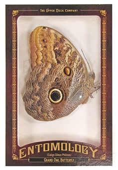 2011 Upper Deck Goodwin Champions #ENT26 Grand Owl Butterfly Entomology
