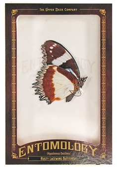 2011 Upper Deck Goodwin Champions #ENT22 Rusty Lace Wing Butterfly Entomology