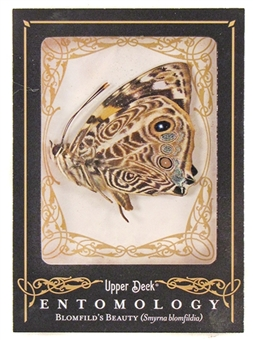 2009 Upper Deck Goodwin Champions #ENT8 Blomfilds' Beauty Entomology