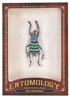 2011 Upper Deck Goodwin Champions #ENT8 Blue Striped Weevil Entomology