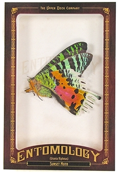 2011 Upper Deck Goodwin Champions #ENT25 Sunset Moth Entomology
