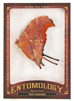 2011 Upper Deck Goodwin Champions #ENT11 Ruddy Daggerwing Entomology