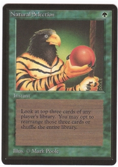 Magic the Gathering Beta Single Natural Selection UNPLAYED (NM/MT)