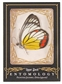 2009 Upper Deck Goodwin Champions #ENT9 Painted Jezabel Entomology
