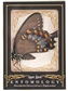 2009 Upper Deck Goodwin Champions #ENT12 Spicebush Swallowtail Entomology SP